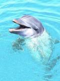 Afbeelding van Animal Essences Dolphin (Doflijn) (30ml)