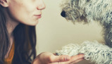 Imagine din 'Get Inside Pets' Heads & Hearts' Online Course