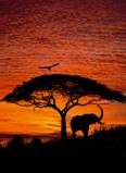 Afbeelding van Komar Fotobehang National Geographic African Sunset 194x270 cm 4 501