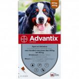 Image de Advantix Spot on 4 pipettes