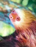 Afbeelding van Animal Essences Sloth (Luiaard) (30ml)