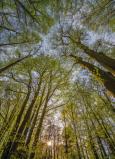 Afbeelding van Canopy 4 delig Fotobehang 184x254cm Natuur