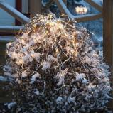 Afbeelding van Best Season lichtbundel Waterval met LED, 100 cm, kunststof, B: cm