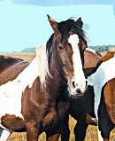 Afbeelding van Animal Essences Wild Horse (Wild Paard) (30ml)