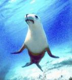 Afbeelding van Animal Essences Seal (Zeehond) (30ml)