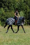 Bilde av Bucas Buzz Off Riding Zebra