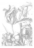 Afbeelding van KEK Amsterdam Engraved Flowers I WP.327 (Met Gratis Lijm)