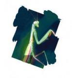 Afbeelding van Animal Essences Praying Mantis (Bidsprinkhaan) (30ml)