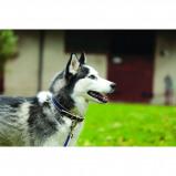 Bild av Amigo by Horseware Dog Collar Blue Extra Large