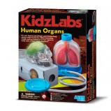 Image of KidzLabs The Human Organs (3374)