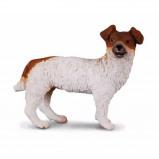 Afbeelding van Collecta 88080 Jack Russell terrier