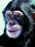 Afbeelding van Animal Essences Chimpanzee (30ml)