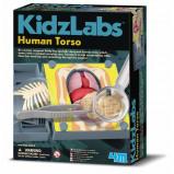 Afbeelding van 4M KidsLabs Human Science: anatomie romp