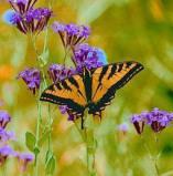 Afbeelding van Animal Essences Butterfly (Vlinder) (30ml)