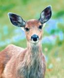 Afbeelding van Animal Essences Deer (Hert) (30ml)