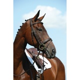 ObrázekCollegiate Bridle Syntovia+ Flash Brown Cob