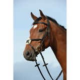 ObrázekCollegiate Bridle Syntovia+ Figure 8 Brown Full