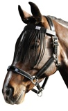 Imagen deCinturón de ceño negro de Harry's Horse (Caballo a medida: cob)