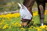 ObrázekAmigo by Horseware Amigo Finemesh FlyMask Silver purple Pony