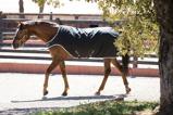 Image ofAmigo by Horseware Amigo Walker 200g Black/silver L