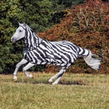 Image ofBucas Buzz Off Zebra With Detachable Neck