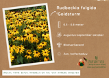 Afbeelding vanRudbeckia fulgida Goldsturm Zonnehoed