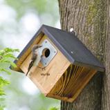 Image ofAlamo 32mm Nest Box