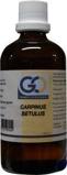 Afbeelding vanGO Carpinus betulus (100 ml)