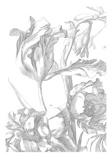 Afbeelding vanKEK Amsterdam Engraved Flowers I WP.327 (Met Gratis Lijm)