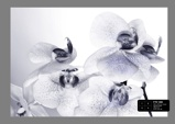 Afbeelding vanDutch Wallcoverings AG Design Orchids (4 Delen) FTS1306