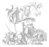 Afbeelding vanKEK Amsterdam Engraved Flowers I WP.331 (Met Gratis Lijm)