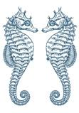 Afbeelding van2 Zeepaardjes