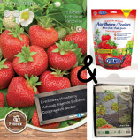 Image ofCultivation package Strawberry Ostara