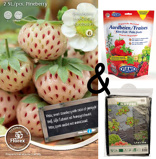 Image ofCultivation package Strawberry White Pineberry