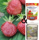 Image ofCultivation package Strawberry Cherryberry